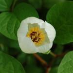 plant (4)