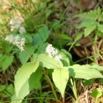 plant (6)